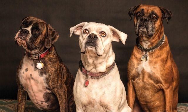 Artykuły dla zwierząt – jakie rzeczy warto kupić dla psa i kota?