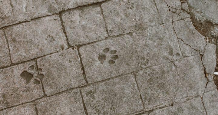 Układamy kostkę granitową w ogrodzie – samodzielnie czy przez fachowców?